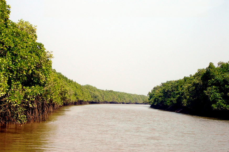 Bhitarkanika National Park reopens for tourists   Vagabond Images