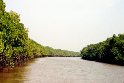 Bhitarkanika is well known for its fascinating mangrooves