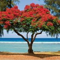 Reunion voted world's most beautiful island