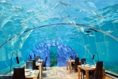 Dining under the water with fishes and scuba divers around is an amazing experience