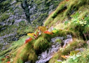 Whole valley is covered with some very rare herbs and shrubs