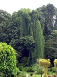 plants/trees you wouldn't see anywhere else