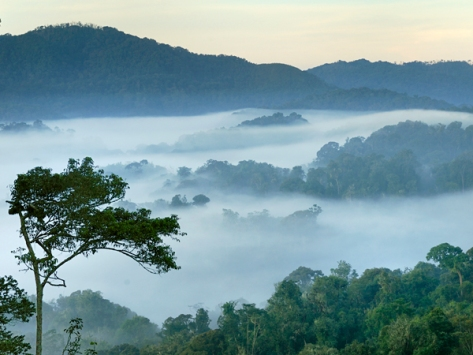 Mist over forest at dawn, Nyungwe Forest National Park, Rwanda. Photo: Thomas Marent, Minden Pictures/Corbis/National Geographic