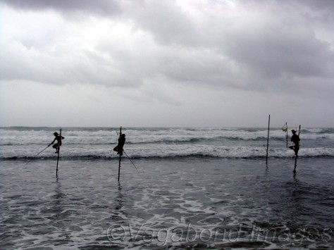 Stilt fishermen of Galle