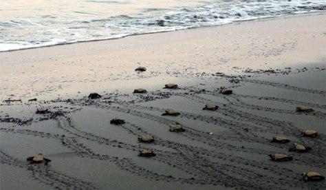 turtle685