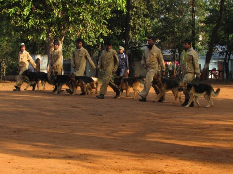 Sniffer_Dogs1