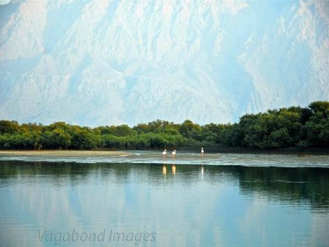 Ras Al Khaimah - Mangroves