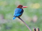 I might be a 'Kingfisher' but I am no defaulter!