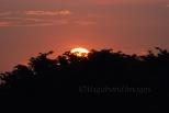Prambanan Sunset23