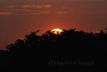 Prambanan Sunset24