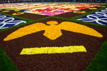 Flower-Carpet-2016_10