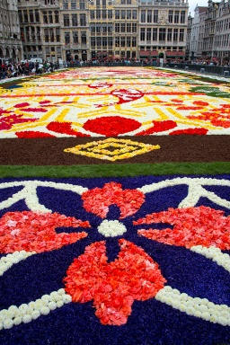 Flower-Carpet-2016_9