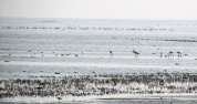 A colony of flamingos