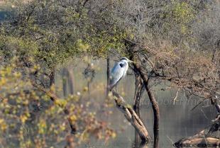 Sariska Birds23