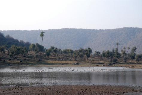 Kankwari Lake surrounded by hills of Rajaurgarh