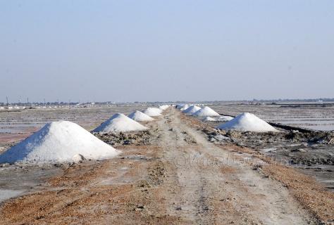 Salt fields in Sambhar