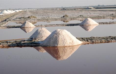 Salt fields of Vijay Chaudhary